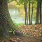Ładny oraz {zadbany zieleniec to nie lada wyzwanie, zwłaszcza jak jego pielęgnacją zajmujemy się sami.